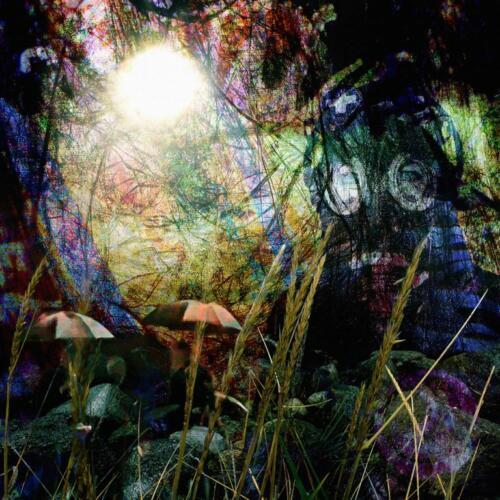 Forest Enlightenment